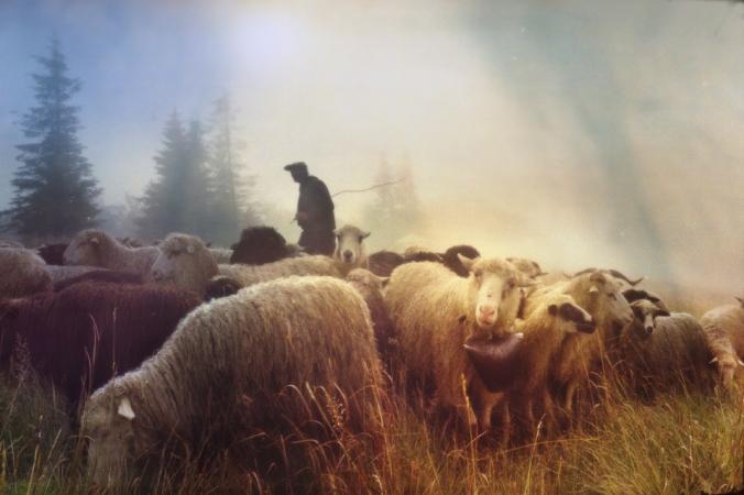 shepherding 1.jpg